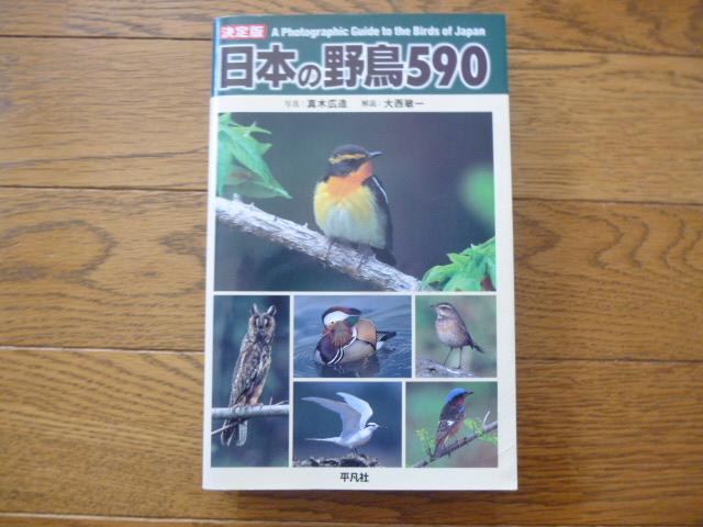 日本の野鳥590